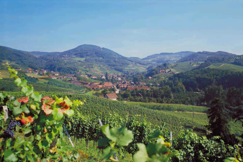 Saschwaller-Landschaft3